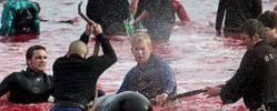 "AIDA und HapagLloyd boykottieren Färöer - TUI Cruises ""uneinsichtig"""