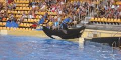Loro Parque's 'Encyclopedia of Anti-Captivity Arguments' (Marine Connection/WDSF)