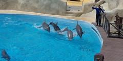 BREAKING NEWS - Frankreich verbietet Haltung und Nachzucht von Delfinen und Orcas in Gefangenschaft