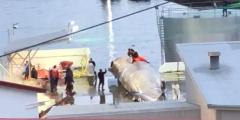 WDSF bereitet internationalen Tourismusboykottaufruf gegenüber Island nach Tötung eines weltweit geschützen Blauwals vor
