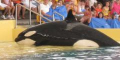 Thomas Cook streicht Loro Parque und SeaWorld - TUI behält Themenparks im Programm